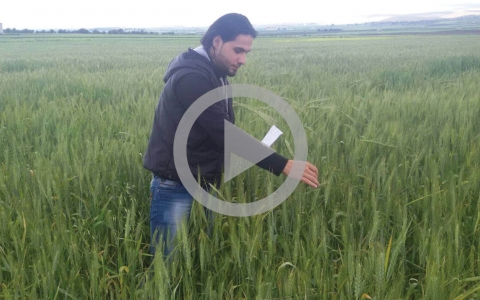 Agricultural project in Syria